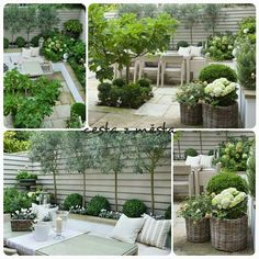 So viele schöne Ideen - Garden trellis ideas - Gardener Small Courtyard Gardens, Small Courtyards, Back Gardens, Small Gardens, Outdoor Gardens, Backyard Patio, Backyard Landscaping, Pot Jardin, Exterior