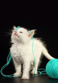 Cats sure like they're yarn!