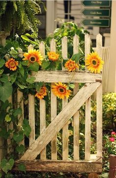 Garden gate of sunflowers