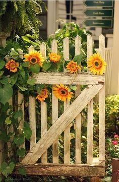 Garden gate of sunflowers