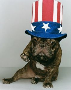 french bulldog fourth of july outfits - Google Search