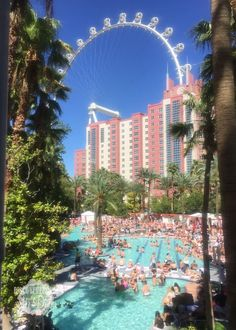 Adult Only Pool at the Flamingo Las Vegas