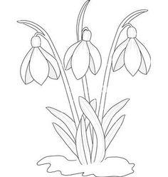 Malvorlage Schneeglöckchen Blumen Pinterest