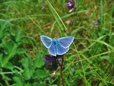 Carlingford- Templetown- The Breakers #1- butterfly- DSCF9122