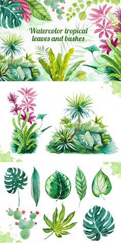 Set of watercolor tropical leaves illustrations.