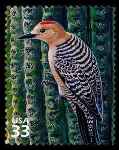 US Stamp 1999 - Sonoran Desert Gila Woodpecker