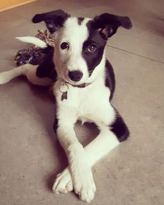 Puppydog Eyes and Crossed Paws http://ift.tt/2BK8wyu cute puppies cats animals