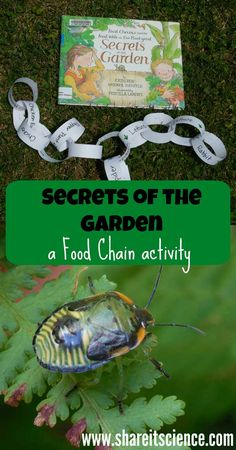 Understand food chains and how they are formed whilst connecting picture books with science in this fun Garden themed activity Food Chain Activities, Nature Activities, Steam Activities, Kids Learning Activities, Teaching Science, Science For Kids, Science Activities, Life Science, Science Penguin