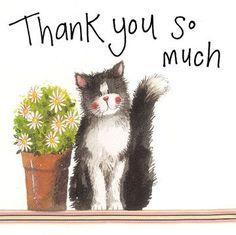 Birthday Messages, Birthday Greetings, Birthday Wishes, Birthday Cards, Thank U Cards, Thank You Greetings, Cat Cards, Greeting Cards, Thank You Memes