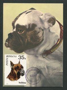 ROMANIA MK 1971 HUNDE BULLDOGGE HUND DOG MAXIMUMKARTE MAXIMUM CARD MC CM c9017