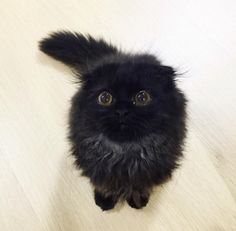 Whether it's staring directly into the camera… | This Cat Might Have The Most Adorable Eyes You've Ever Seen