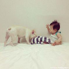 お気に入りのしまぞう君♥️ #frenchbulldog #frenchie #dog #daughter #babygirl #フレンチブルドッグ #女の子