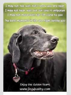 Old dogs are wonderful