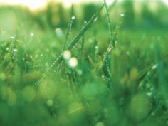 NTR | Het Klokhuis - Onderwerp Ridders (nee, niet gras en was alleen geen andere afbeelding beschikbaar)