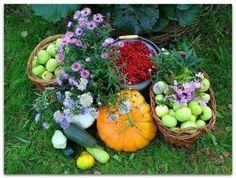37 хитростей для садоводов и…