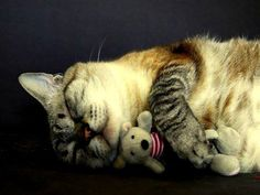 cat with plush toy