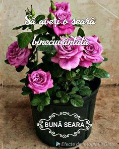 Floral Wreath, Wreaths, Plants, Decor, Cat Breeds, Floral Crown, Decoration, Door Wreaths, Deco Mesh Wreaths