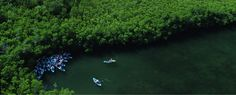 A fun and unique multi-eco experience awaits you with a kayaking, hiking, and snorkeling tour in St Thomas' unique Mangrove Lagoon Wildlife Sanctuary & Marine Reserve. #CaribbaConnect
