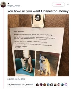 50 Tweets You're Gonna Love If You Have A Dog Or Know A Dog