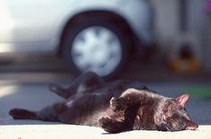 道端のねこちゃん | Flickr - Photo Sharing!