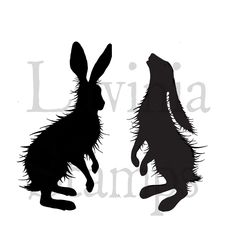 Woodland Hares ( lav409)