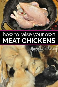 Learn how to raise meat chickens in your backyard for the best chicken dinner! Get easy ideas for raising them with kids to minimize attachment. Includes tips for choosing breeds, what to feed them and when to move them to a coop. Grow Your Own Food, Food To Make, Raising Meat Chickens, Chickens Backyard, Backyard Farming, Time To Eat, Baby Chicks, Natural Living, Whole Food Recipes