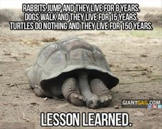 Lesson From A Turtle, click the link to view more funny pictures !