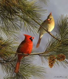 cardinal birds Cardinals and Pine by Robert Hautman Cute Birds, Pretty Birds, Beautiful Birds, Animals Beautiful, Exotic Birds, Colorful Birds, Cardinal Birds, Cardinal Bird Tattoos, Foto Real
