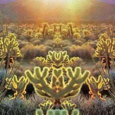 cactus via: evencowgirlsgettheblues