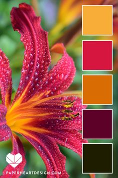 Color Palette: You Can Learn a Lot of Things From the Flowers — Paper Heart Design Color Schemes Colour Palettes, Colour Pallette, Color Combos, Orange Color Schemes, Color Balance, Balance Design, Color Harmony, Design Seeds, Paint Colors For Home