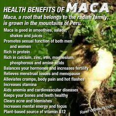 #Maca benefit - balancing #hormones. www.swisshealthmed.de