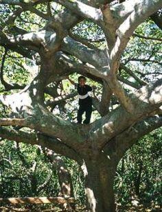Explore El Imposible National Park (El Salvador) with Alex in our Virtual StoryBook | Rainforest Alliance