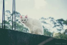 Molly (in the sky with diamonds  ) :: Projeto Xerimbabo  #petphotography #fotografiapet #pet #animal #animaux #bicho #amobicho #gato #gatto #chat #chat #cat #catlovers #instacat #caterday #mãedegato #meow #canon #135mm #Xerimbaboproject #sky