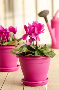 Adopta una flor y llena tu corazón de alegría
