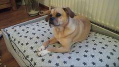 Zelf hondenkussen gemaakt! #pugglelove #hondenkussen #stars