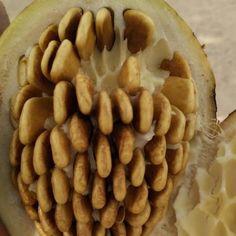 Almond, Beans, Vegetables, Food, Essen, Almond Joy, Vegetable Recipes, Meals, Yemek