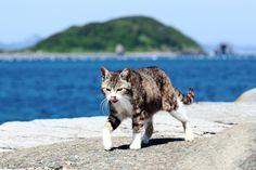 「猫の島」で人気の福岡県相島 - Yahoo!ニュース(デイリースポーツ)