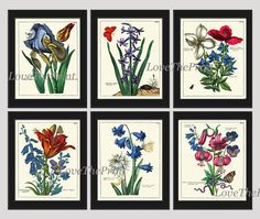 Antique Botanical Print Set of 6 Beautiful Rare Blue Iris Lily Butterfly Beetle Green Graden Nature Illustration Home Room Decor Wall Art Unframed. Beautiful set of 6 prints based on antique botanical illustrations from 1794. Wonderful details, colors and natural history feel. • The prints measure 4x6, 5x7, 8x10, or 11x14 inch. based on your selection and come with a white border for easy framing. • Printed on professional artist archival matte paper. • The prints are part of Amazon…