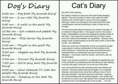 Best Compare And Contrast Images  Reading Comprehension Reading  Dog Diary  Cat Diary Funny Cats Funny Animals Adorable Animals Its  Funny