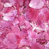 Bright Pink Preserved Freeze Dried Peony Petals. Stunning peony petals are all natural & freeze dried  Non-staining, not slippery. All natural, eco-friendly & biodegradable!   Flyboy Naturals Grows thousands of hydrangeas for our petal production www.flyboynaturals.com #rosepetals #flyboynaturals #petals #wedding  #weddingpetals #aisle #bridetobe #ceremony #ceremonyideas #flowers #proposal #peonypetals