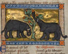 Discarding images Liked · December 21 ·    elephants  bestiary, Flanders ca. 1270 (LA, J. Paul Getty Museum, MS. Ludwig XV 3, fol. 99r)