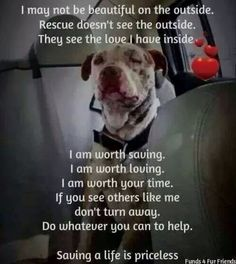 If I had a million dollars I would save all the dogs from the pounds. I would give the dogs to people I know and trust. I would give the dogs a home and I would give them love no matter how they looked. Every dog is unique!