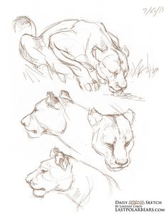 Daily Animal Sketch – Lioness – The Last of the Polar Bears