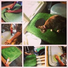 """DIY cat litter box! Buy a storage tub, cut a hole in top, glue carpet or fake turf like we did, add kitty litter and you are good to go! Look on petco's website and find ''clevercat top entry litter box"""" for measurement$"""