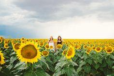 Best Friend Photoshoot, sunflowers, sunflower field, sunflower photoshoot, Colorado, nature