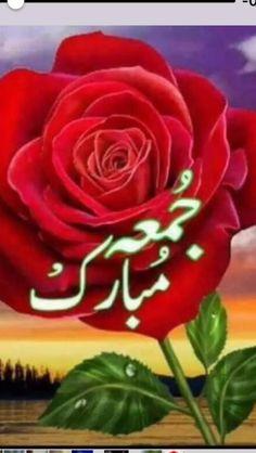 Juma Mubarak Images, Jumah Mubarak, Rose, Flowers, Plants, Pink, Jumma Mubarak Images, Plant, Roses