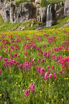 Waterfall and Wildflowers in Porphyry Basin, Colorado