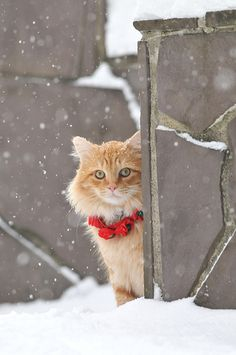 festive kitty in the snow