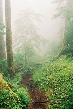 trail in forest
