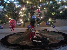 December 7, 2014 ~ Sparky hanging out in our bonus room under our second Christmas tree.